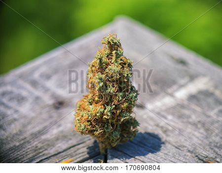 Detail of dried cannabis bud (Congolese Strain) over wood texture - medical marijuana concept background