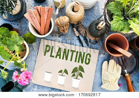 Planting Gardening Flower Farm Global