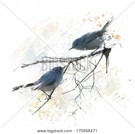 Digital Painting of  Blue-gray Gnatcatchers