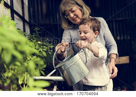 Watering Plant Growing Pastime Environment