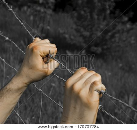 Coloured tortured hands grasping desperately barbed wire on black and white background