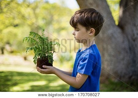 Boy holding sapling plant in park