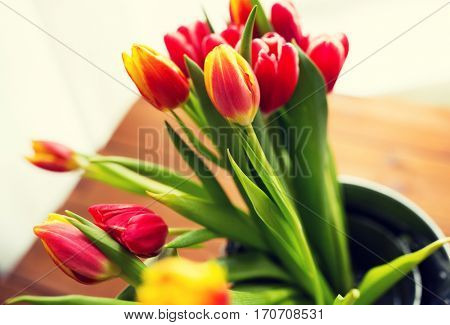 flora, spring, gardening and plant concept - close up of tulip flowers in tin bucket on wooden table at home