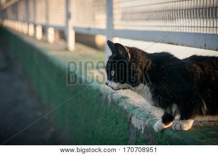 black and white cat near the fence
