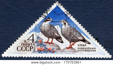 USSR - CIRCA 1973: Postage stamp printed in USSR shows Caucasian ular (lat. Tetraogallus caucasicus). The series