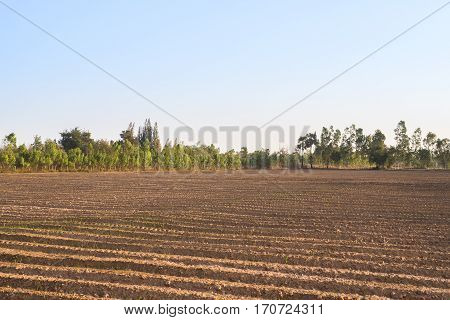 Soil row preparing to make agriculture countryside summer