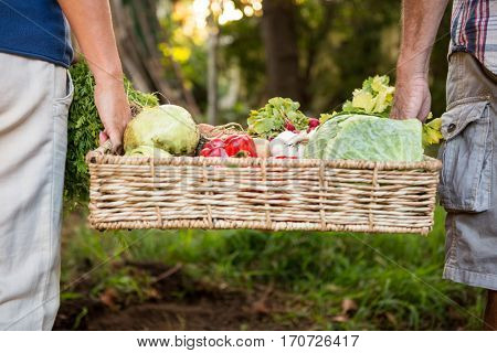 Midsection of mature colleague carrying fresh organic vegetables crate at garden