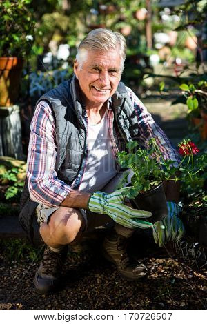 Portrait of happy mature male gardener crouching with potted plants at garden