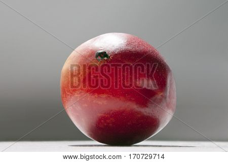 ladybird on a red nectarine gray background
