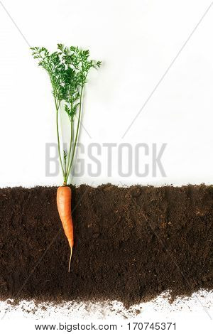 Carrot grow in ground, cross section, cutout collage. Healthy vegetable plant with leaves isolated on white background. Agricultural, botany and farming concept poster