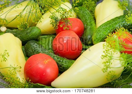 cucumber, tomato and paprika with inflorescence dill. food