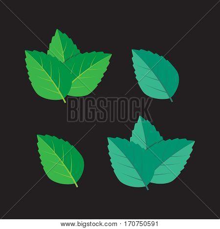 Mint green vector illustration set. Mint green vector