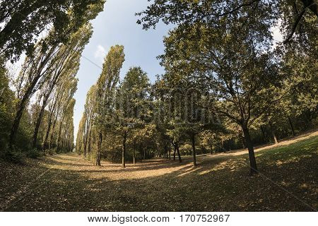 Milan (Lombardy Italy): paths in the park known as Parco Nord in october