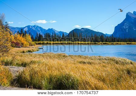Magic Vermillon lake in the Rocky Mountains of Canada. Above the water soars large bird