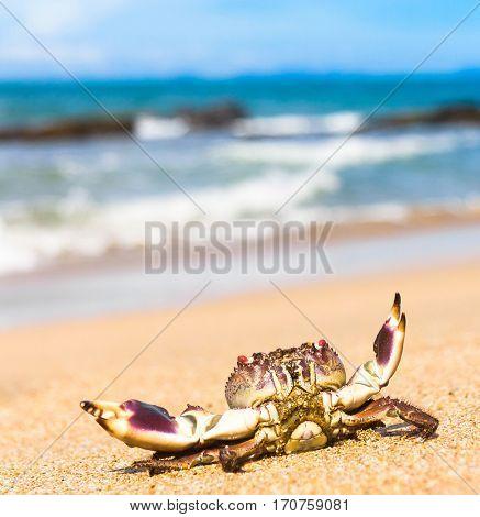 Funny Crab Alien Creature