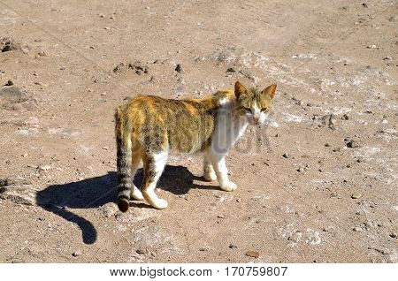 A feral cat warily walks through a rocky and sandy terrain