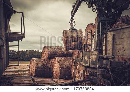 Mechanized harvesting hay for cattle