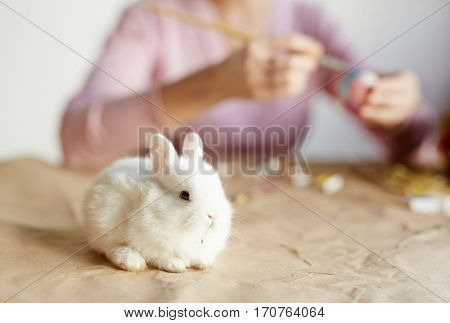 Small white fluffy animal sitting on paper