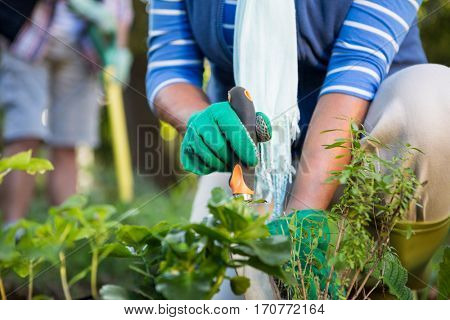 Midsection of mature female gardener planting potted plants at garden