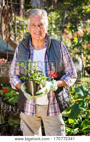 Portrait of confident mature male gardener holding potted plant at garden