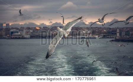 Seagull Istanbul, Bosporus, Turkey. Seagull flying over the sea , against the backdrop of the city , a photo of the ship