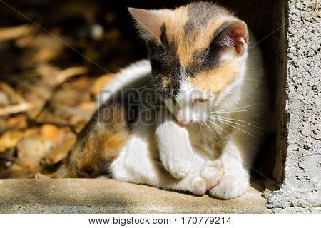 Lovely gesture of young cat with soft focus tone