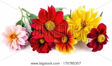 Bunch bright red and yellow flowers with green leaf beautiful dahlia. Isolated on white background.