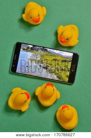 Yellow rubber ducks and smartphone concept isolated in studio