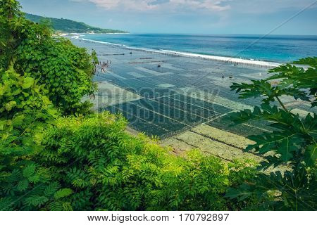 Coast of the island of Nusa Penida with sea weed gardens. Indonesia