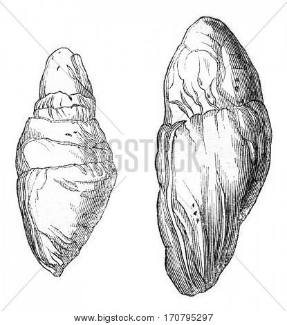 Other Coprolites Lyme, vintage engraved illustration. Magasin Pittoresque 1844.