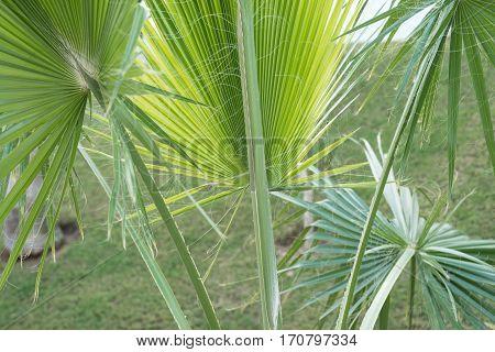 palm trees background close-up. Palm leaf background