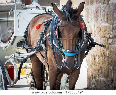 Portrait of a horse, brown horse on Crete island, Greece