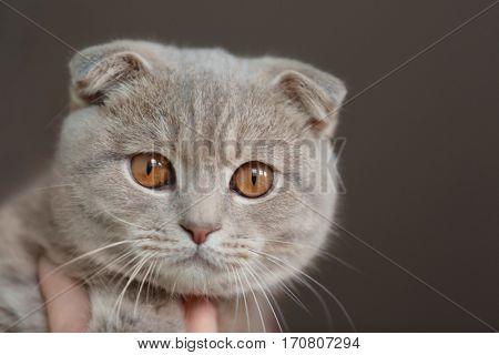 Closeup portrait of cute cat on dark background