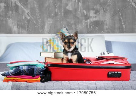 Small dog in suitcase waiting for trip