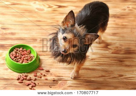 Cute little pet and bowl with dog food on wooden background