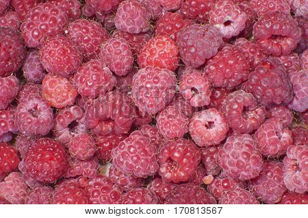 Large fragrant ripe raspberries on the table