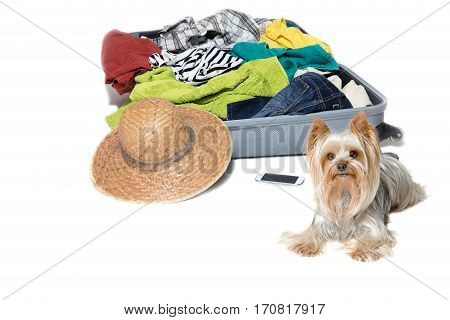 Studio shot of Yorkshire Terrier lying in front of a suitcase with scattered clothing straw hat and a smart phone. Everything is on a white background.