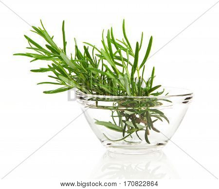 tied fresh rosemary in the glass bowl on a white background