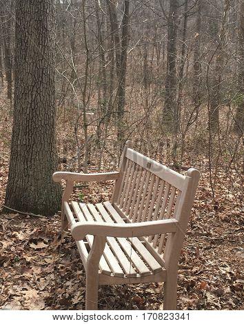 Empty Chair in the JMU Arboretum Park