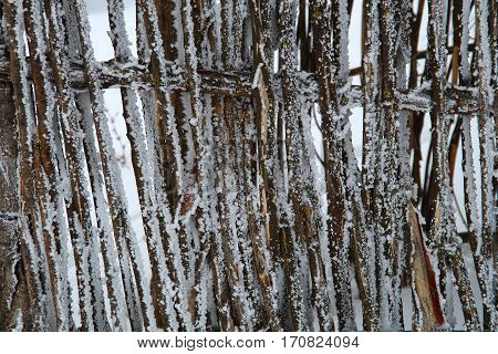 Fence Covered With Frost.