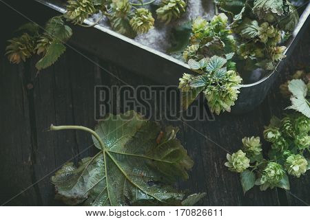 Green Hop Branches
