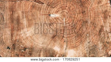 Tree trunk closeup as background