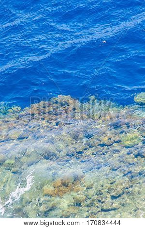 red sea coral reef with hard corals through clean water.