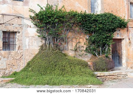 Green vegetation on a wall of an old building Mallorca Spain