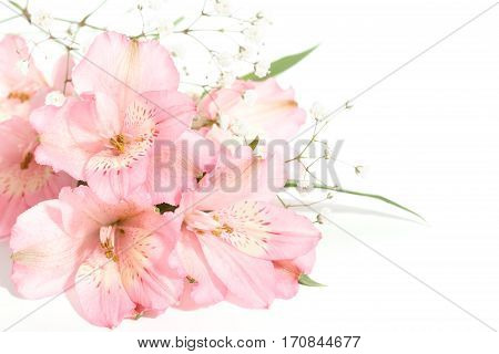 small bouquet of pink alstroemeria with gypsophila on a white background with space for text on the right