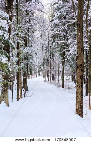 Vertical image of a long driveway in the woods covered with snow.