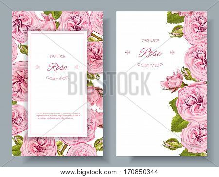 Vector rose natural cosmetic vertical banners on white background. Design for beauty salon, health care products, aromatherapy. With place for text. Can be used as greeting card or wedding invitation