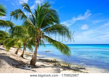 Beautiful caribbean sea and green palmen. Sommer ocean landscape as background.