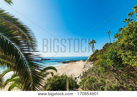 Palms in Laguna Beach in southern California