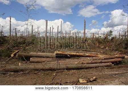 Belarus-August 7, 2016 After a powerful storm left broken and fallen trees, felled forest after hurricane after cutting logs lying on the ground